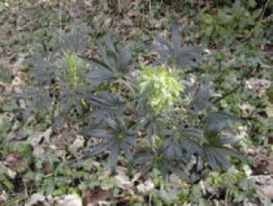 craig-alyn-helebore-scrubcontrol