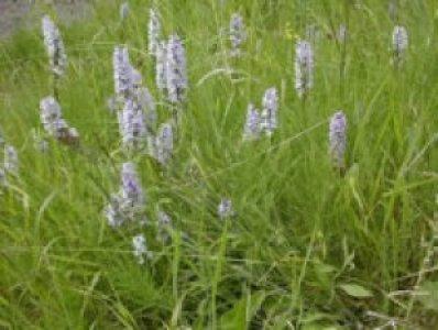 grasslandmanagement11