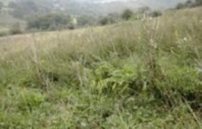 grasslandmanagement31