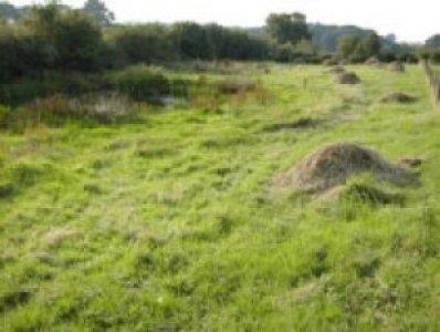 grasslandmanagement51