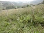 grasslandmanagementSmall